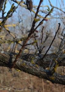 foglie d'inverno