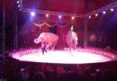 Circo a Fornovo: una piacevole sorpresa. Le bambine ne hanno parlato tutta la sera, domani vorrebbero tornare.