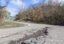 Montagna Ferita: Valceno SP42 del Mozzola strada per fuoristrada