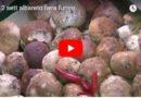 La fiera del Fungo di Albareto. Estratto dal TG del 12 settembre