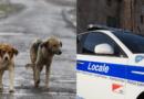 Omessa custodia dei cani: il principale reato amministrativo sanzionato nell'Unione Pedemontana.