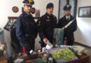 I Carabinieri della Stazione di Fornovo Taro, hanno denunciato un 29enne, responsabile di coltivazione di sostanze stupefacenti.